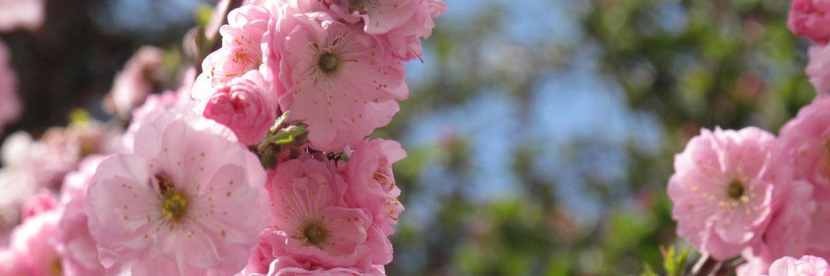 winderberry-wildflowers-07